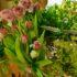 Jaro už se pomalu blíží